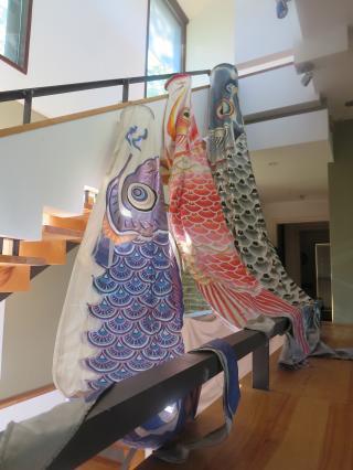 アーカンソーの鯉のぼりは...-1, 2016-5-5