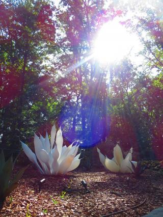 Dale Chihulyの世界/Atlanta Botanical Garden-2, 2016-7-12