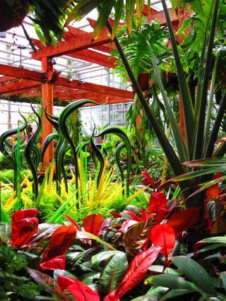 Dale Chihulyの世界/Atlanta Botanical Garden-12, 2016-7-12