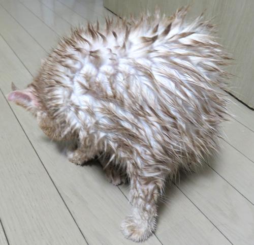 意味不明な生き物になってる猫