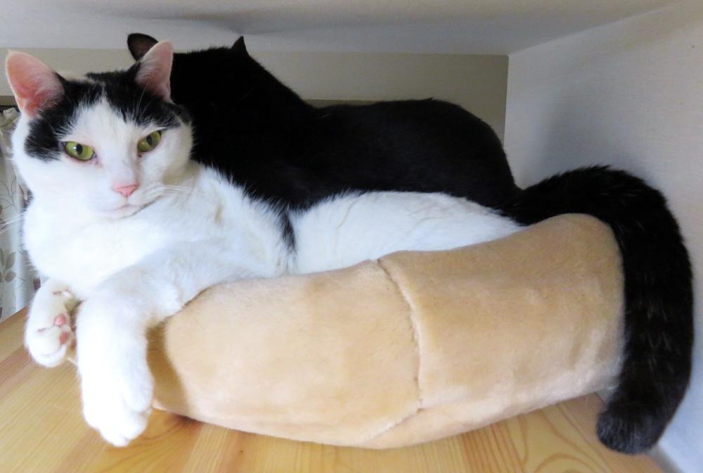二匹ベッドちっぷ側