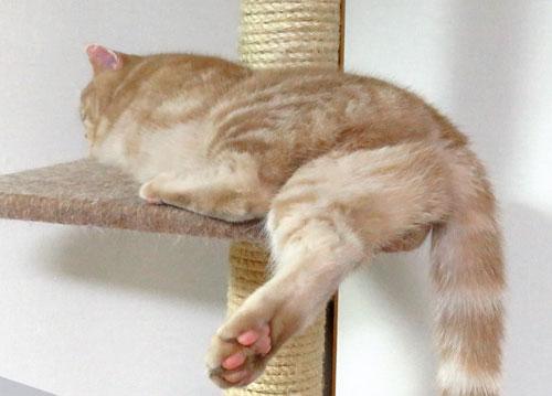 片脚のばして寝る猫のお尻から