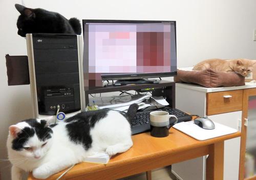 机周辺の猫三匹