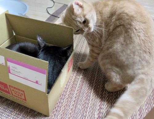 箱にすりつくきなこ