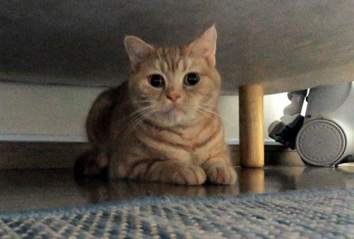 ベッドの下のきなこ