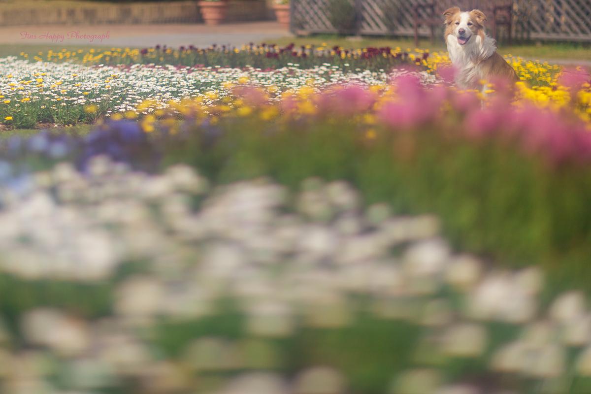 THE 花畑