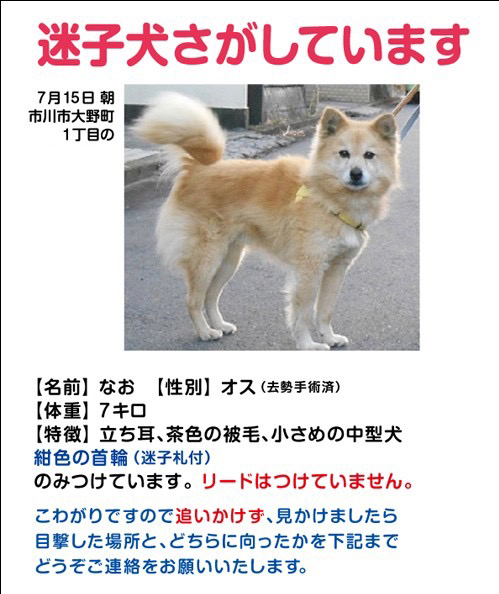 迷子犬探しています!