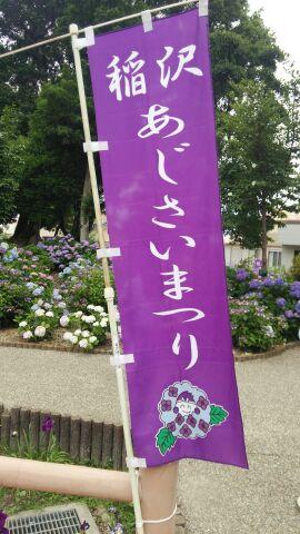 紫陽花祭り①