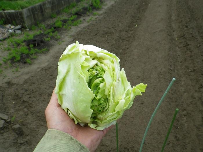 収穫6_16_04_17