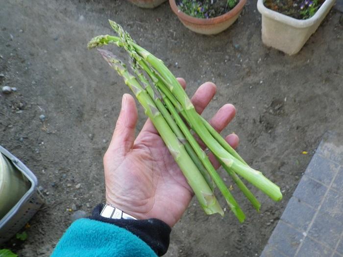 収穫2_16_04_19