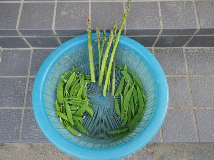 収穫16_04_21