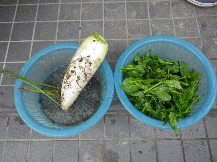 収穫1_16_04_22