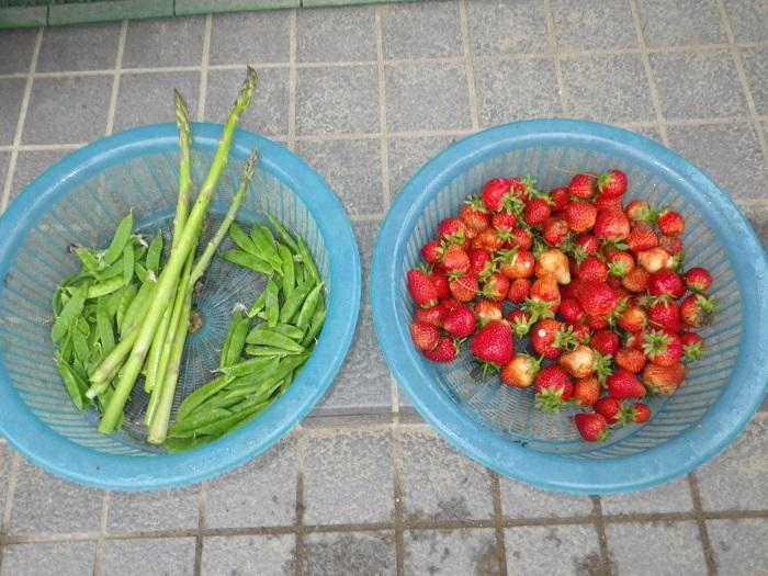収穫16_04_28