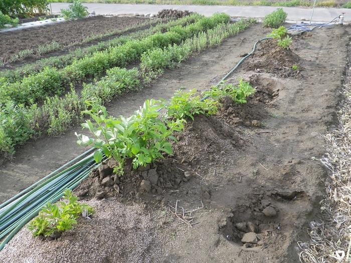 収穫3_16_04_29