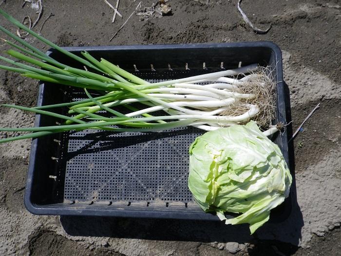 収穫5_16_04_29