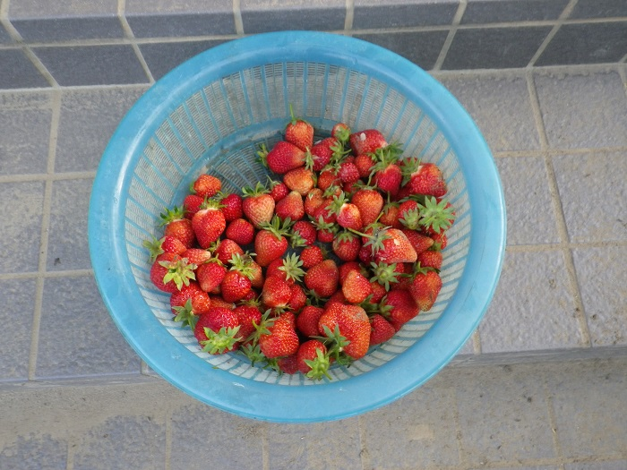 収穫2_16_05_02