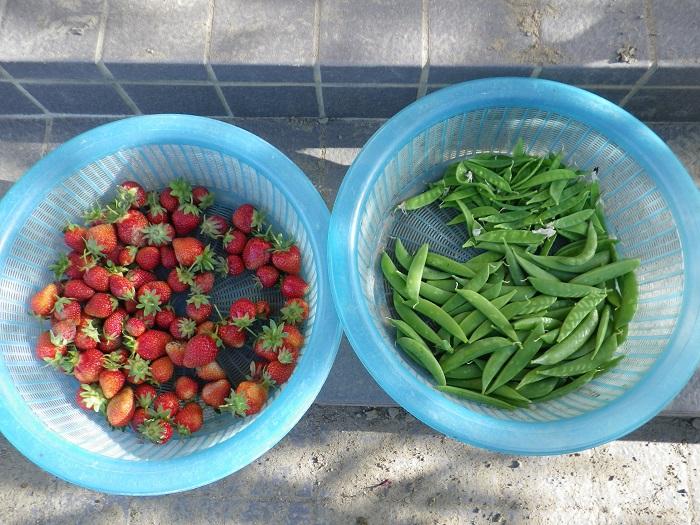 収穫1_16_05_08