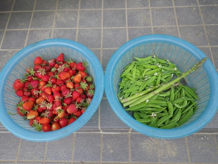 収穫16_05_09