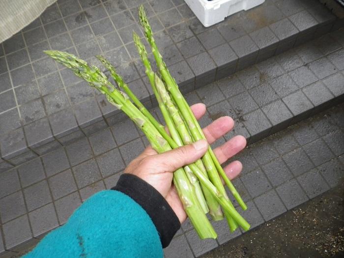 収穫2_16_05_11