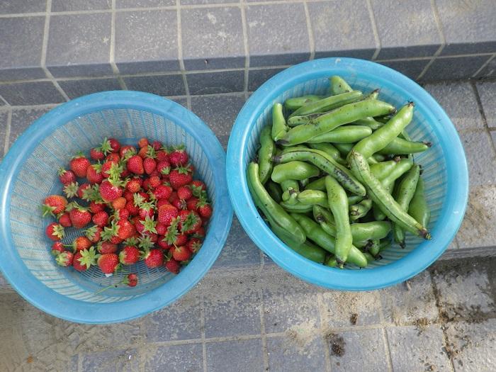 収穫1_16_05_14