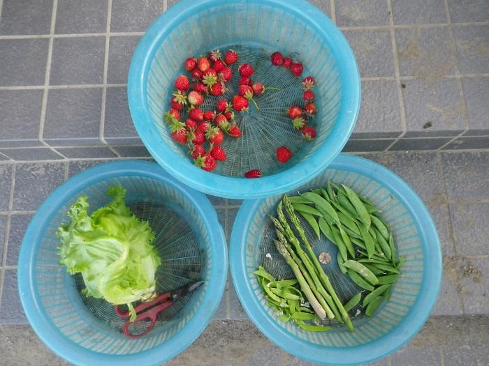 収穫16_05_21