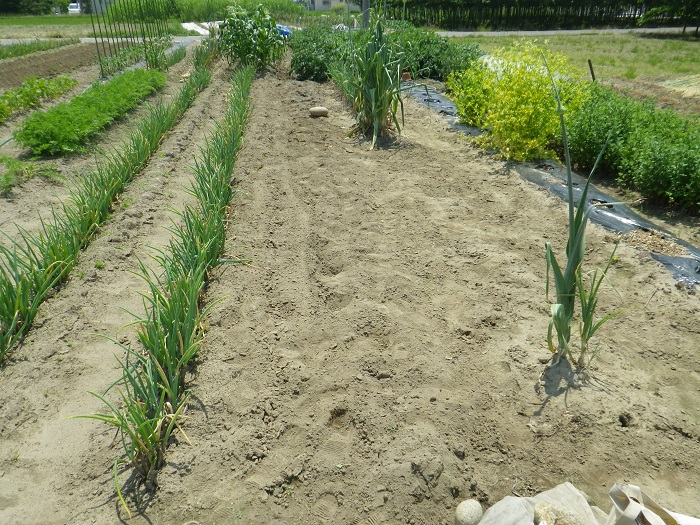 小物野菜の畝1_3_16_05_22