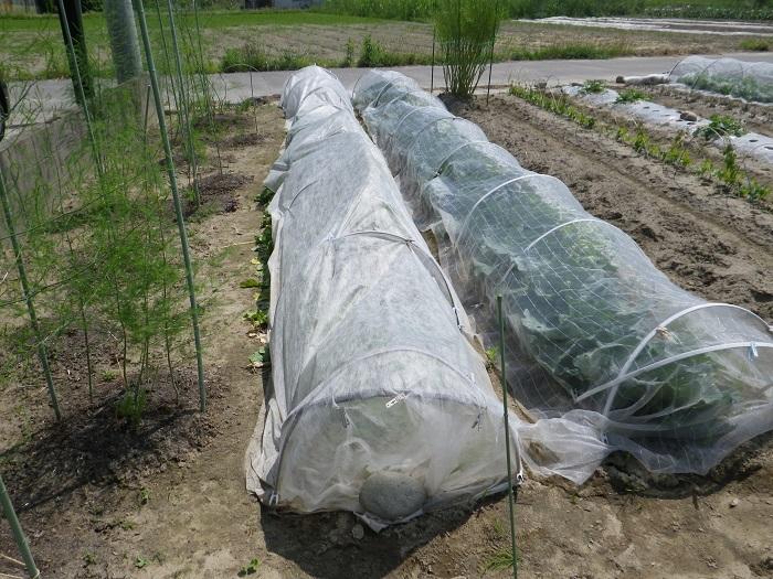 小物野菜の畝2_1_16_05_22