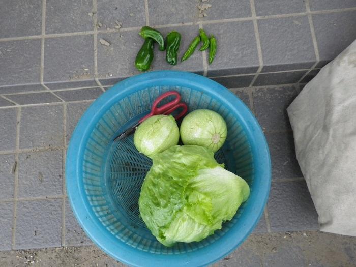 収穫1_16_06_07