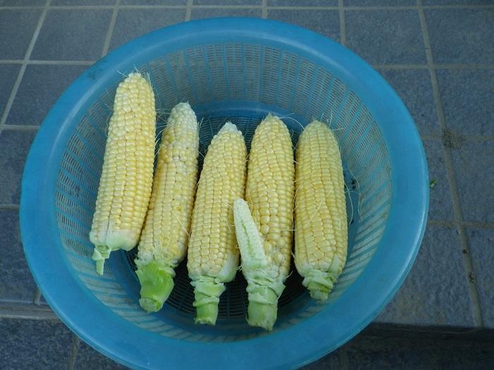 収穫2_16_06_14