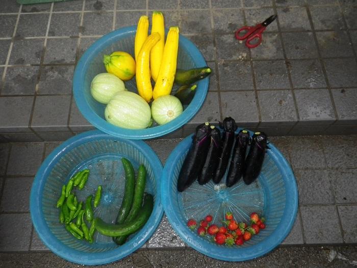 収穫16_06_23
