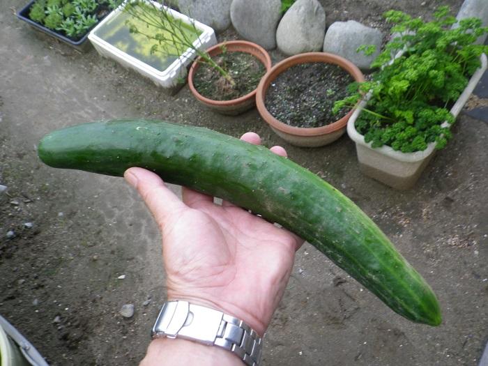 収穫3_16_06_29