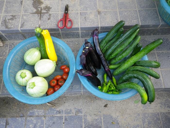 収穫16_07_01