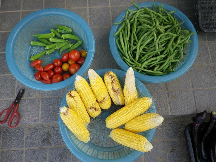 収穫1_16_07_02