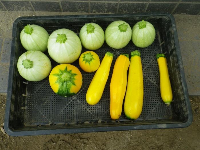 収穫3_16_07_03