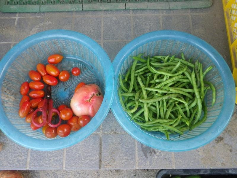 収穫2_16_07_04
