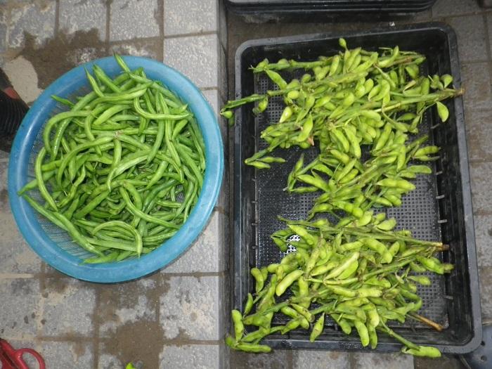 収穫2_16_07_06