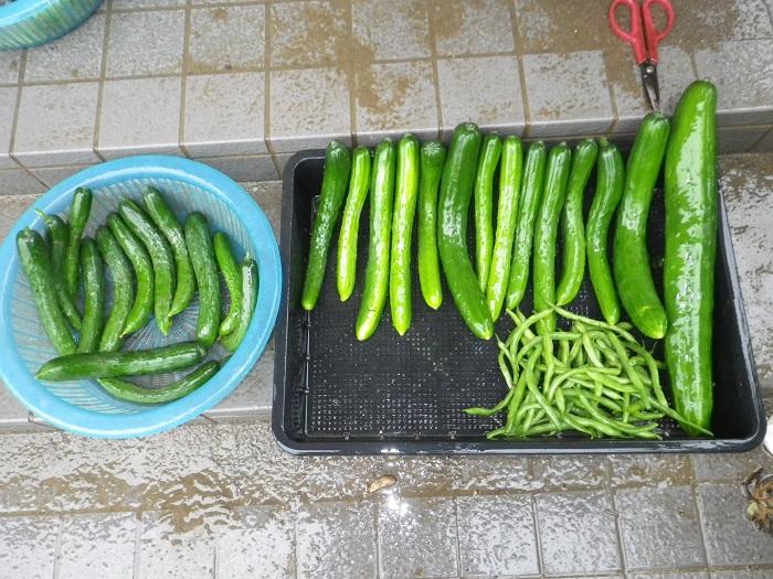 収穫1_16_07_09