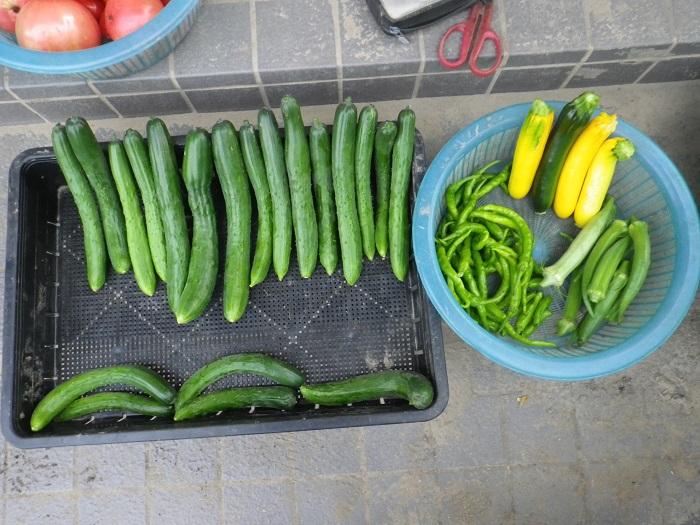 収穫2_16_07_12
