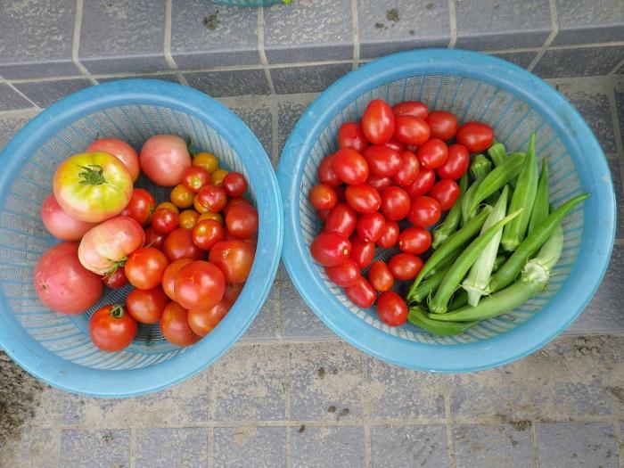 収穫1_16_07_16
