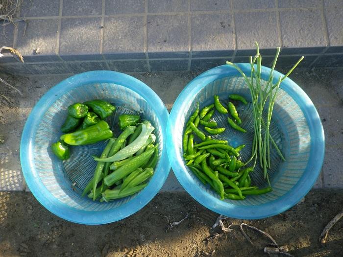 収穫2_16_07_18