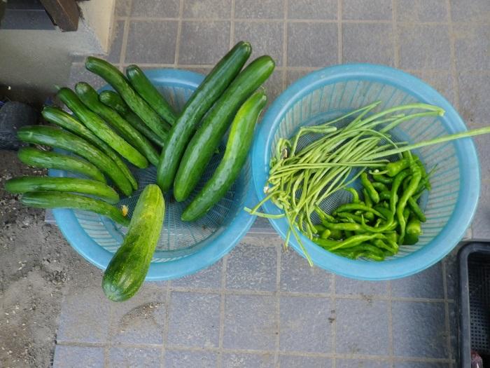 収穫2_16_07_21