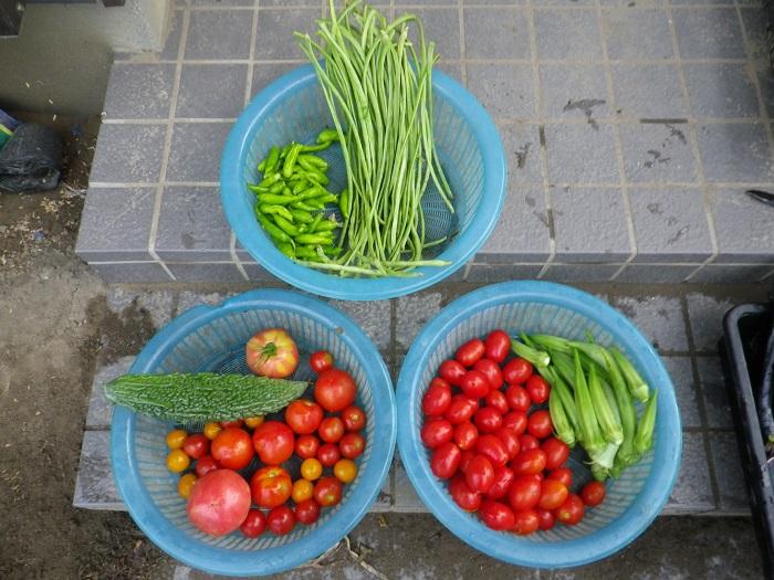 収穫1_16_07_22