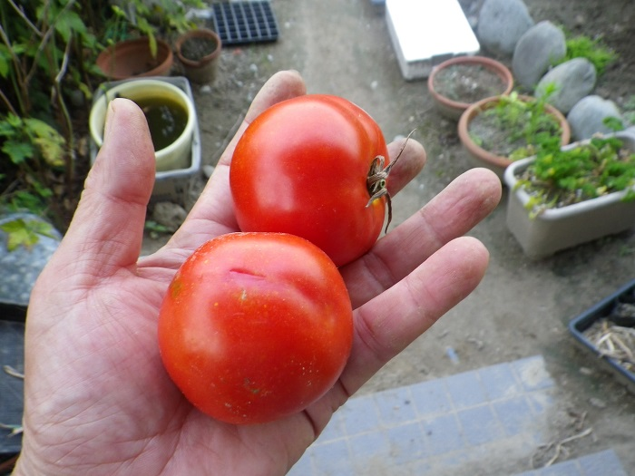収穫3_16_07_23