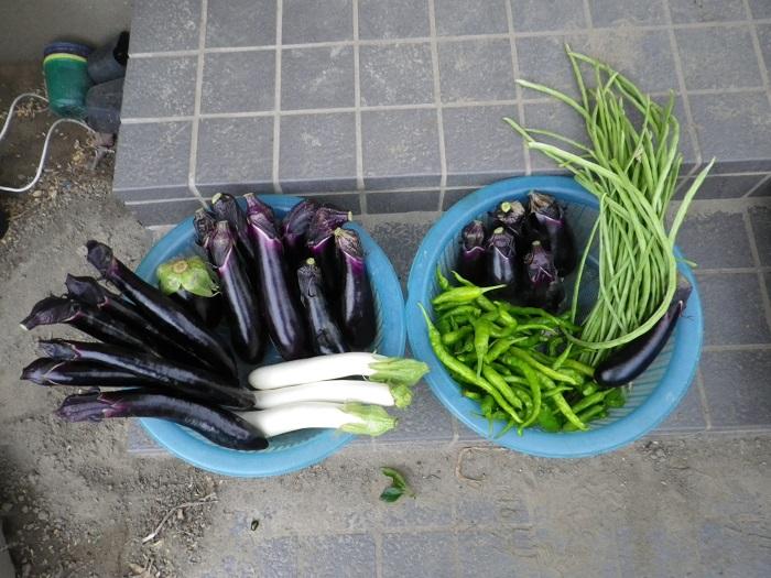 収穫1_16_07_24