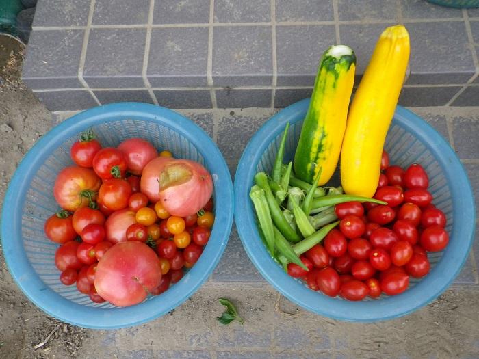 収穫3_16_07_24