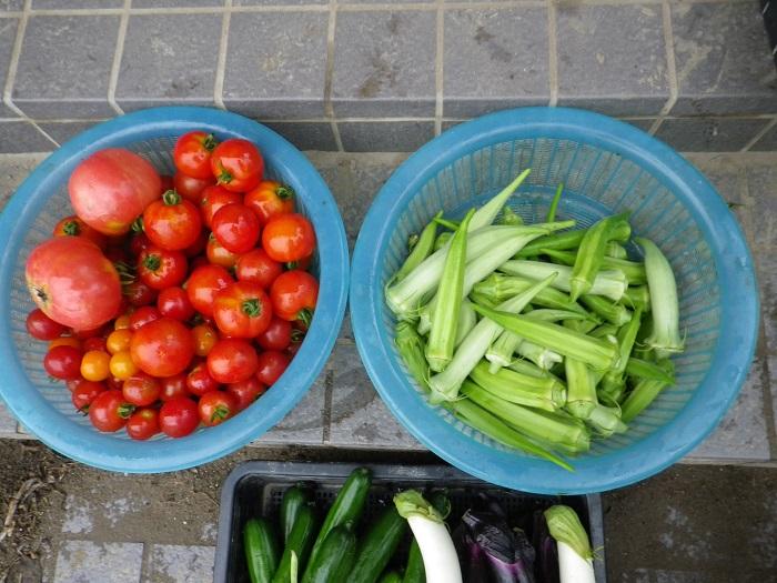 収穫3_16_07_27