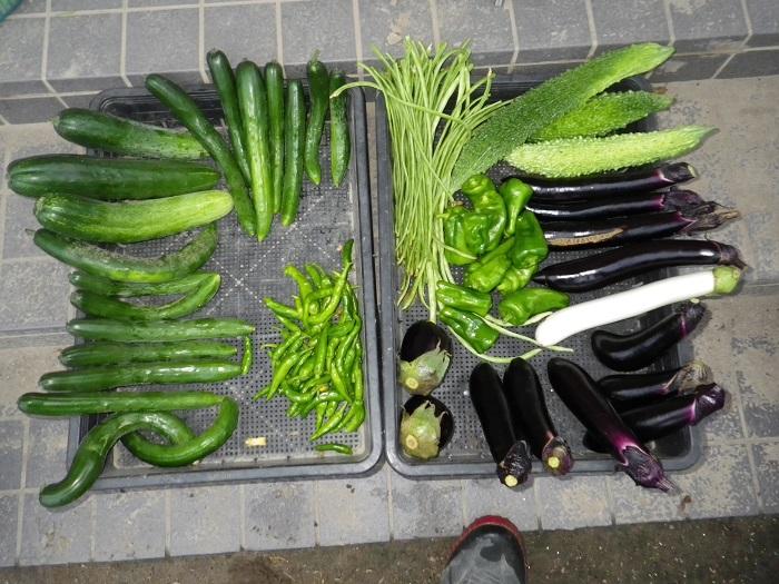 収穫1_16_07_28