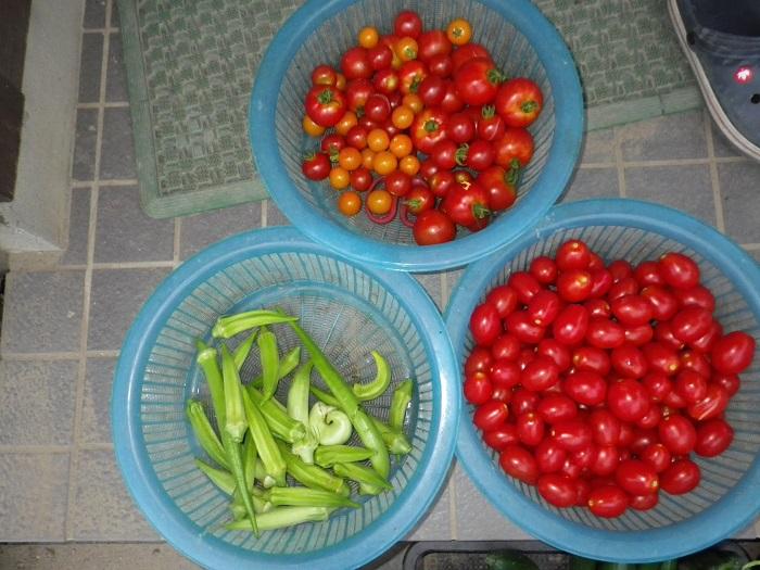 収穫2_16_07_28
