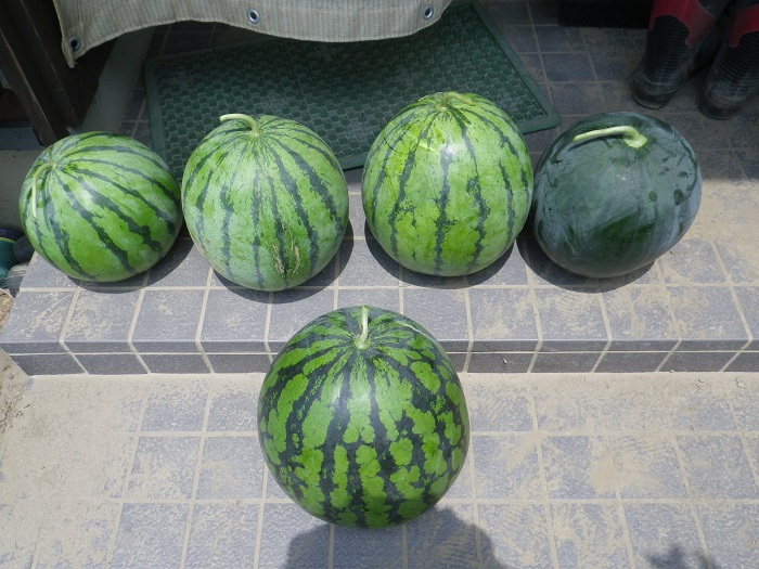 収穫4_16_07_30