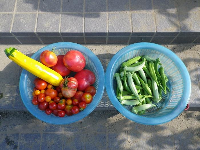 収穫4_16_07_31